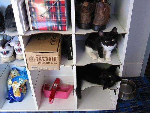 Shelf kittens