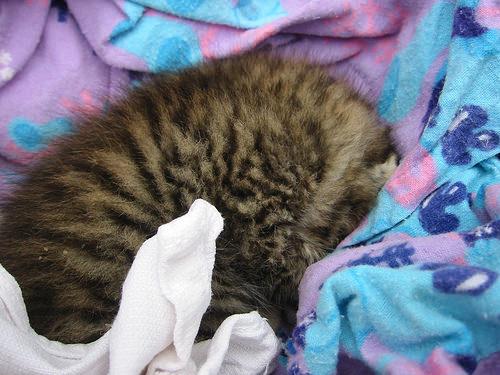 Sleeping furball