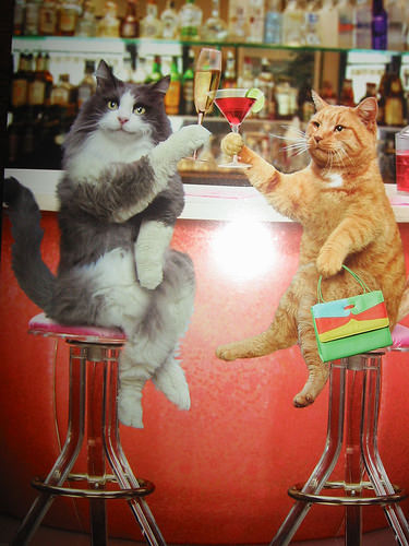 Two Cats At A Bar