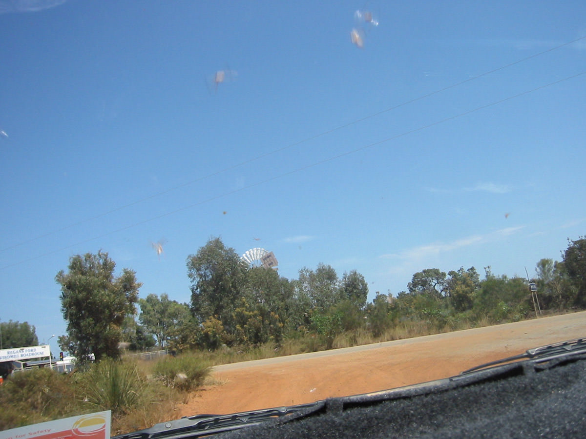 Windscreen view: locusts