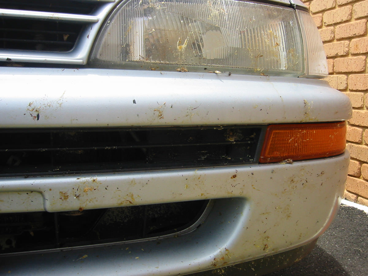 Poor locust-spattered car!