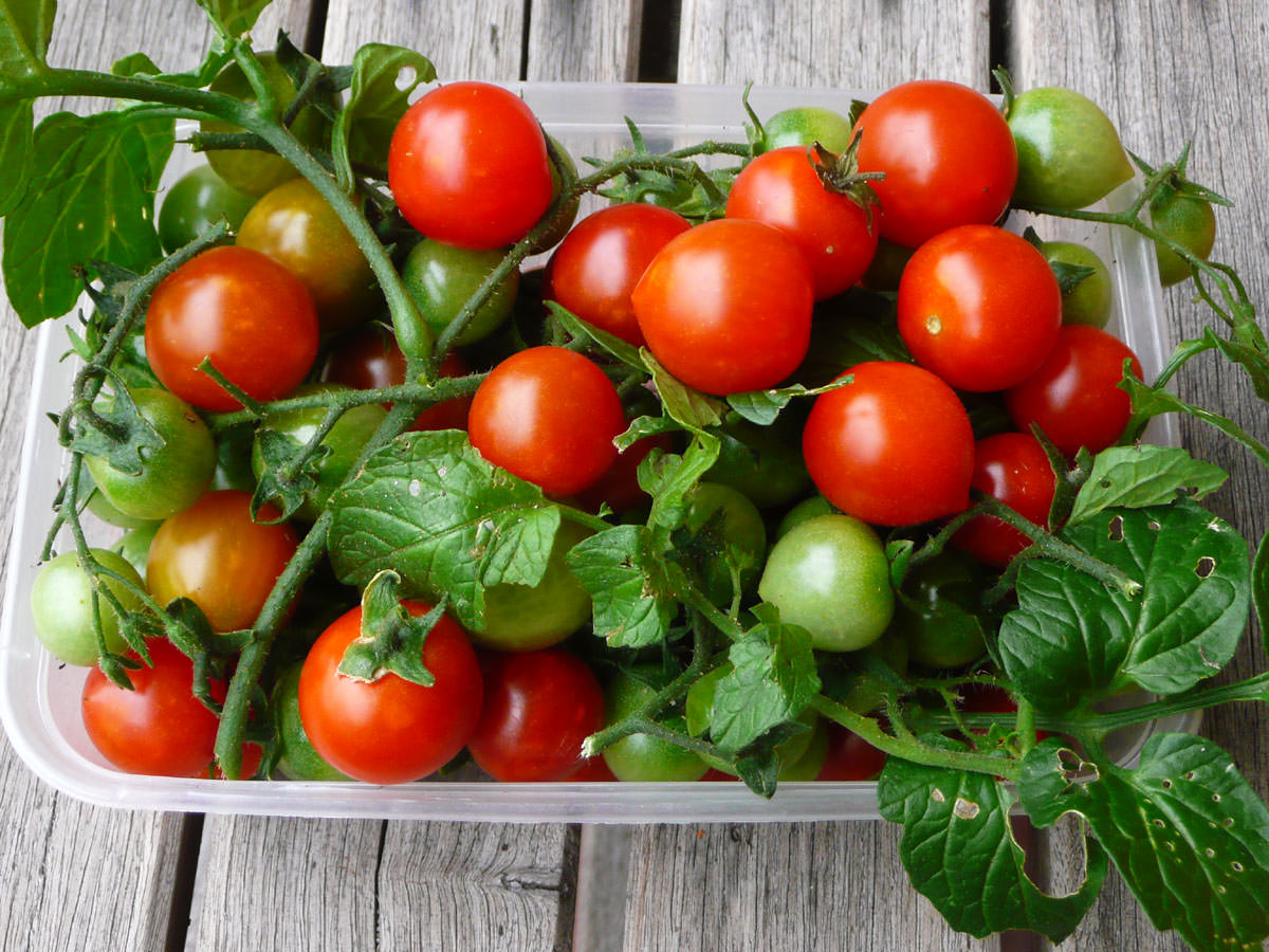Our homegrown cherry tomatoes