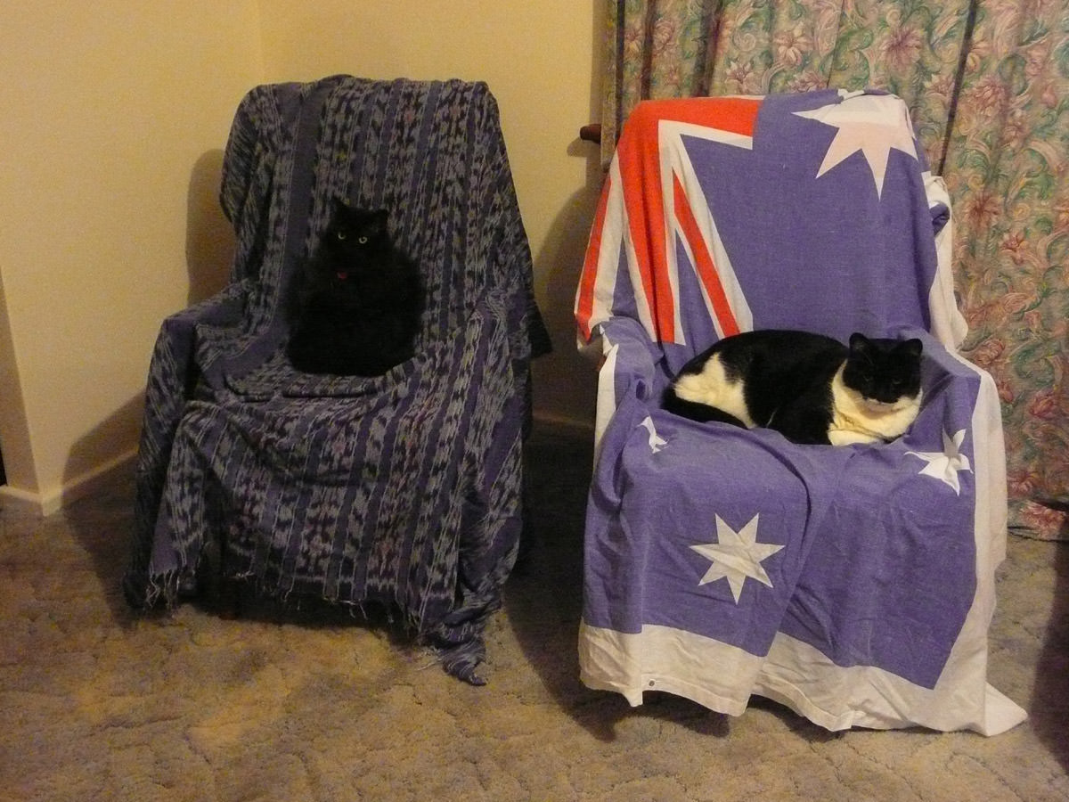 The cats on their thrones