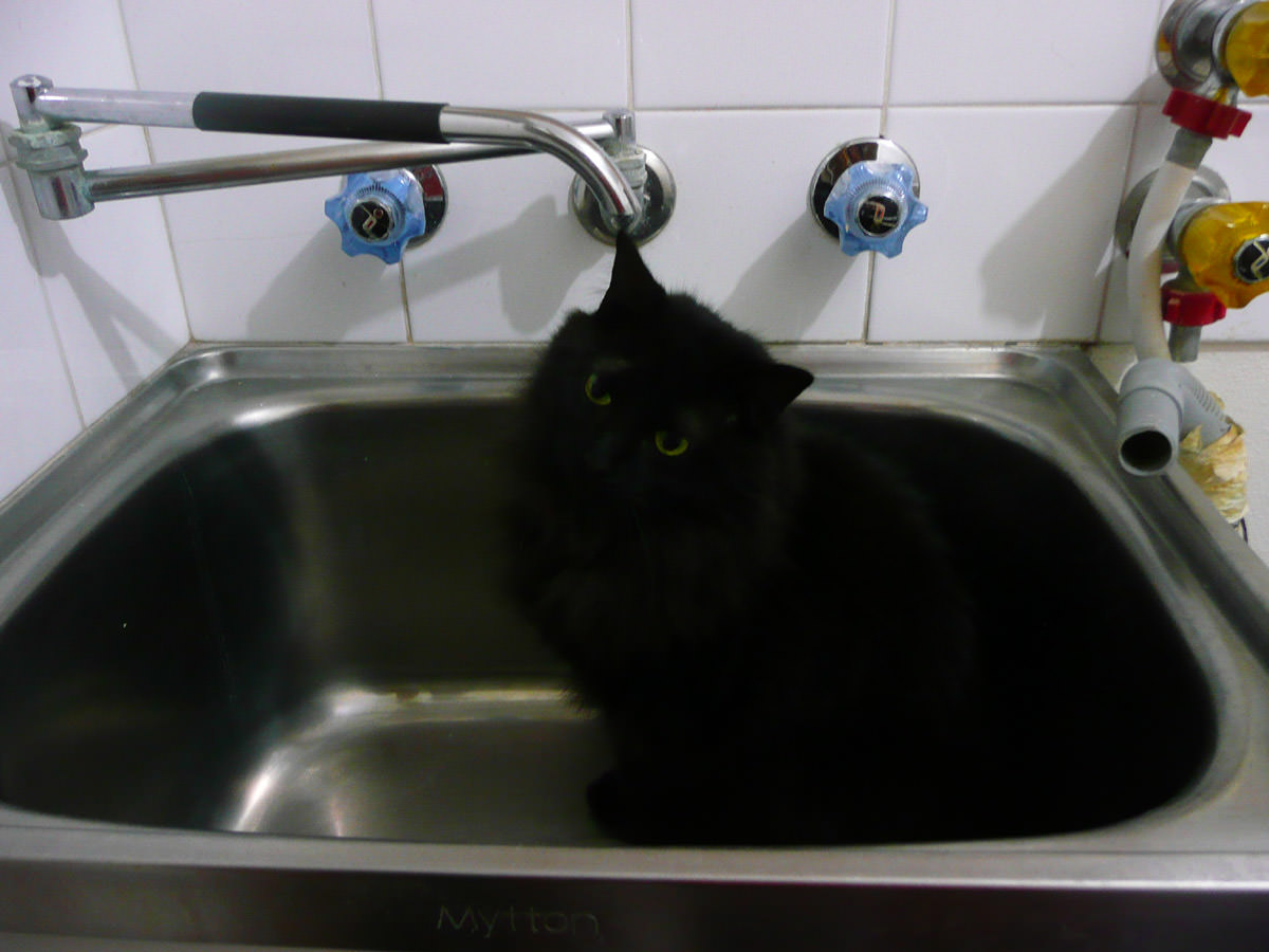 Pixel's last play in the laundry sink