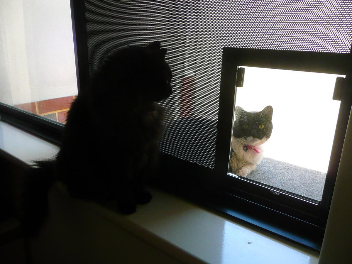 Pixel contemplates her next move