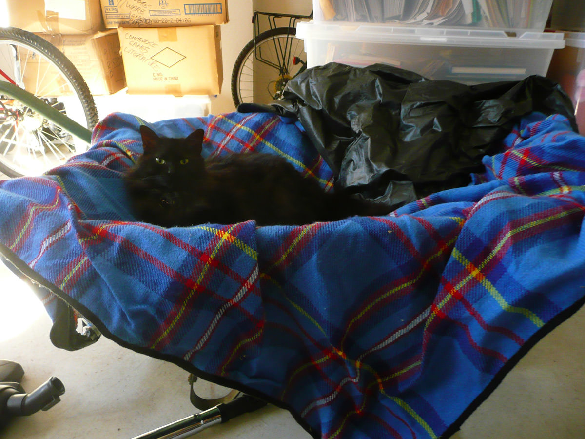 Pixel in a wheelbarrow in the garage