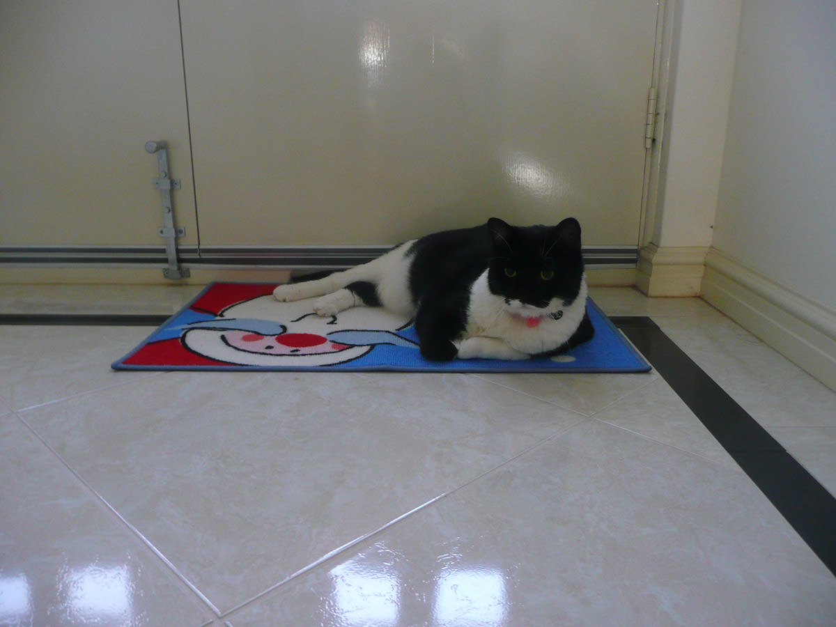Billy Lee likes the Santa welcome mat