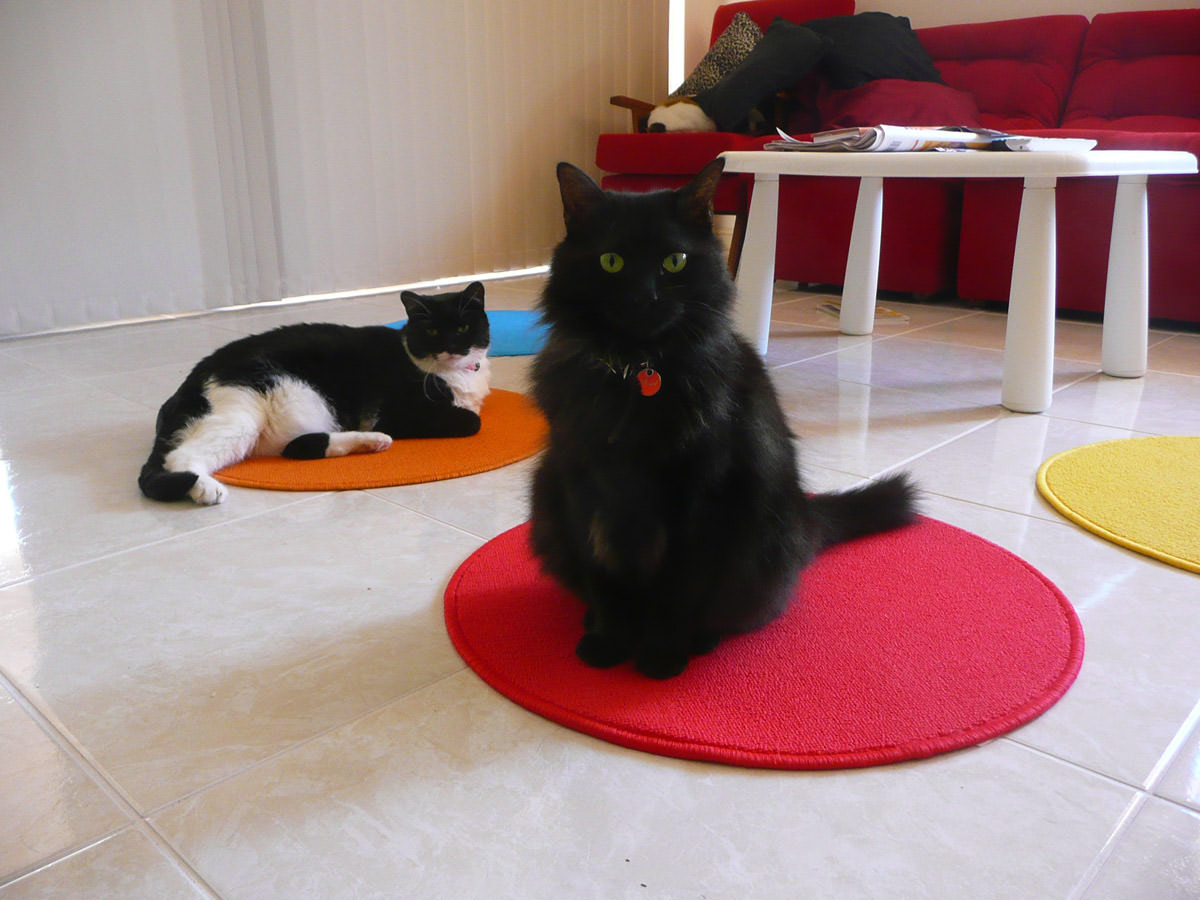 The cats like their new mats