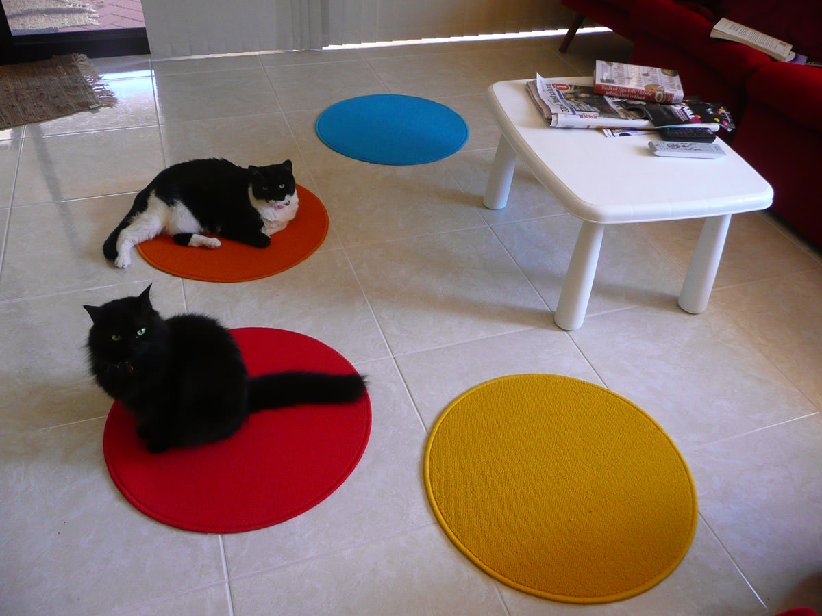 The cats like the new mats