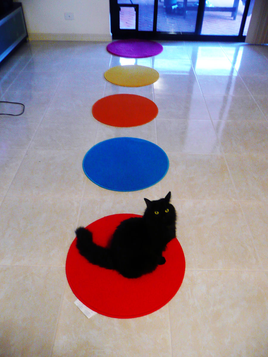 Pixel loves the red mat