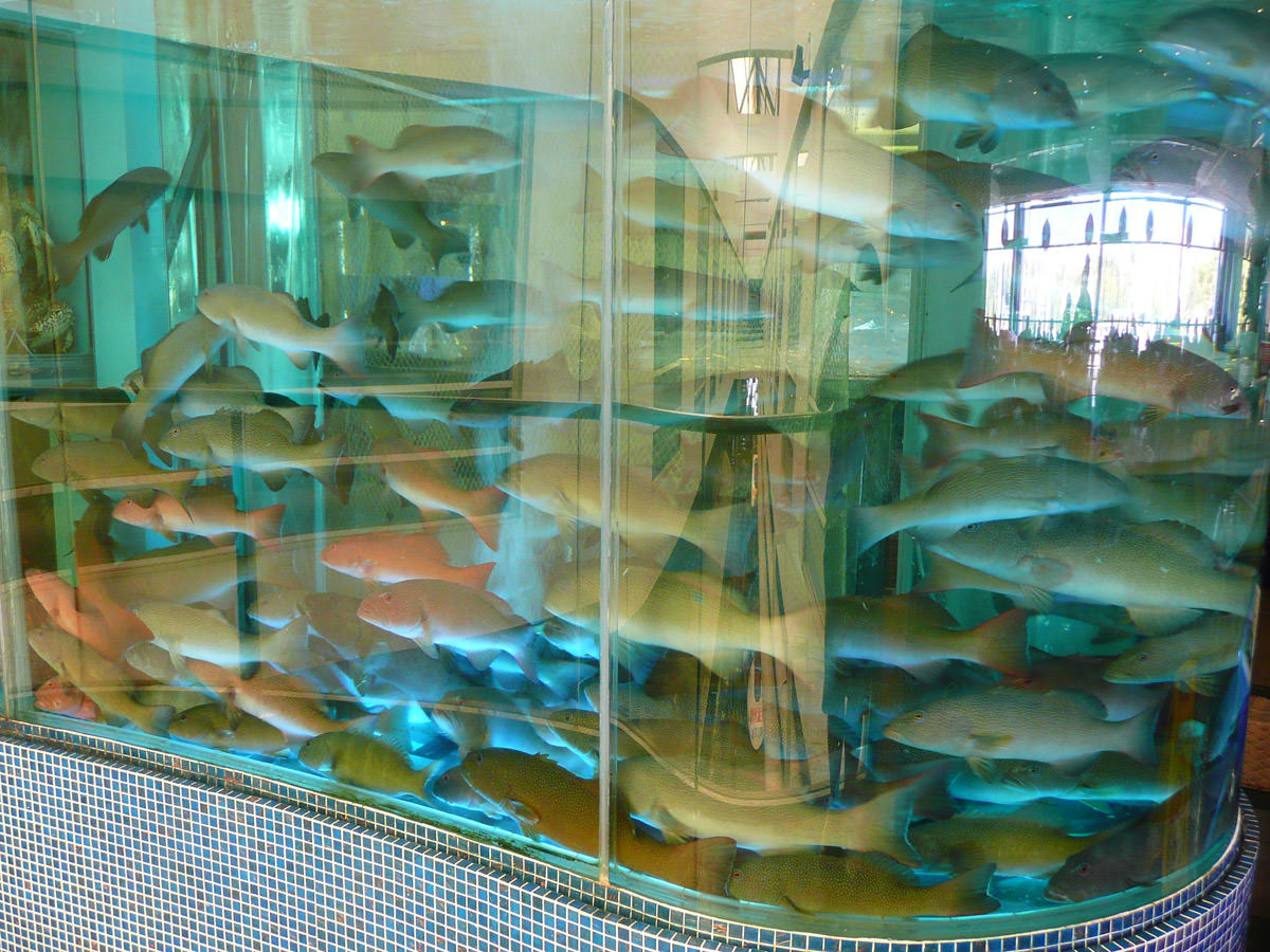 The million dollar fish tank