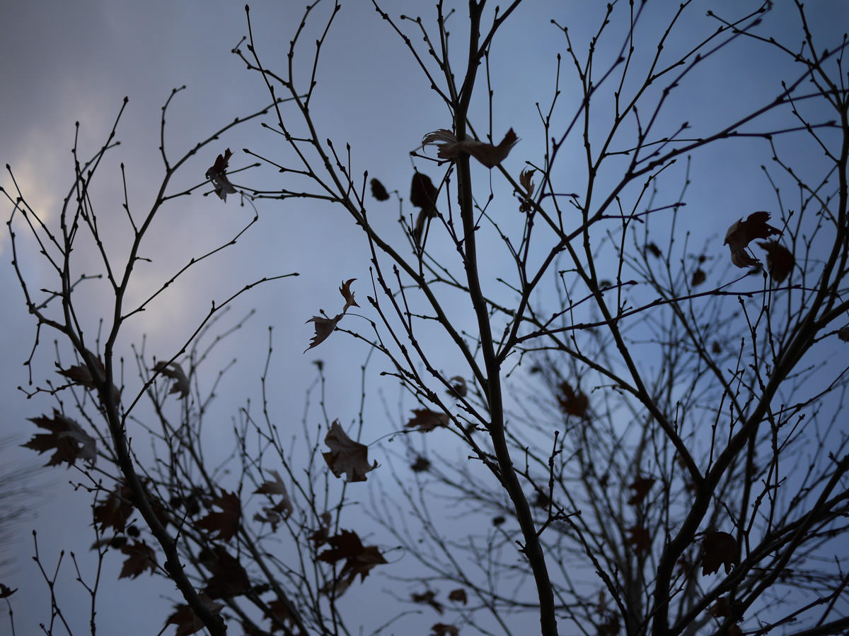 Branches and leaves