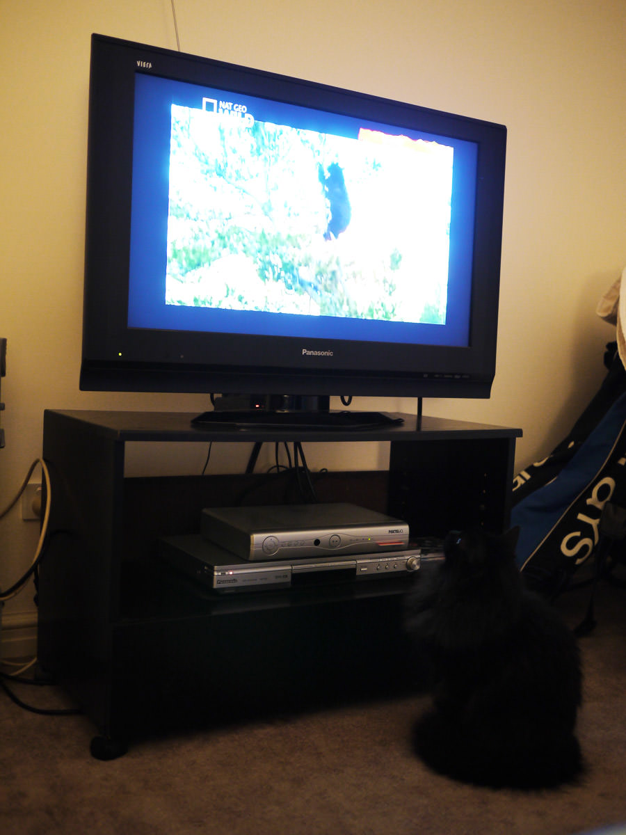 Pixel watches a documentary about bears