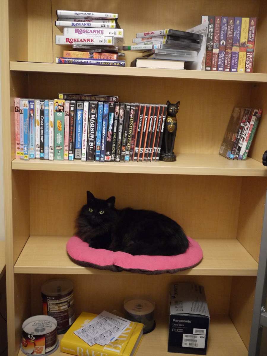 Pixel in the bookshelf
