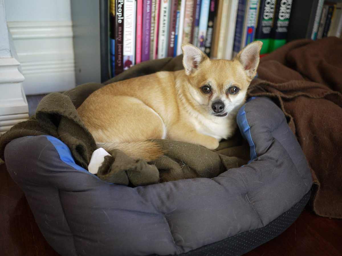 Paco in his bed