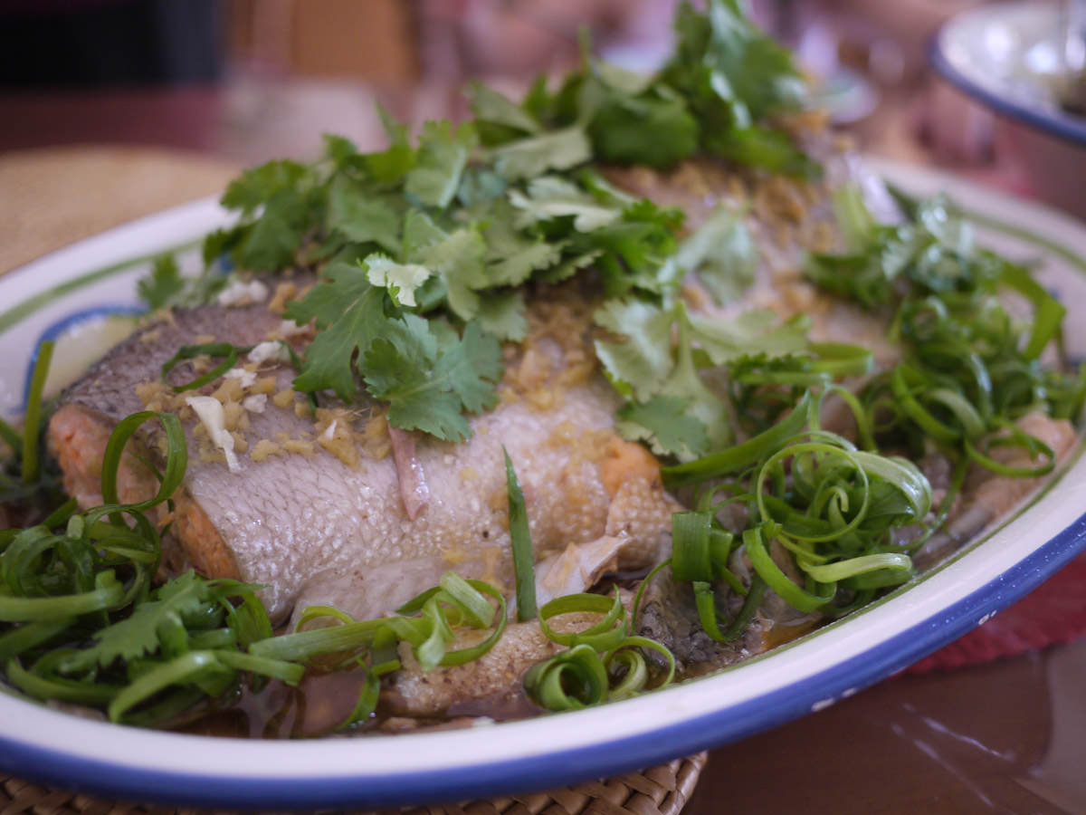Steamed ocean trout, garnished with spring onion and coriander