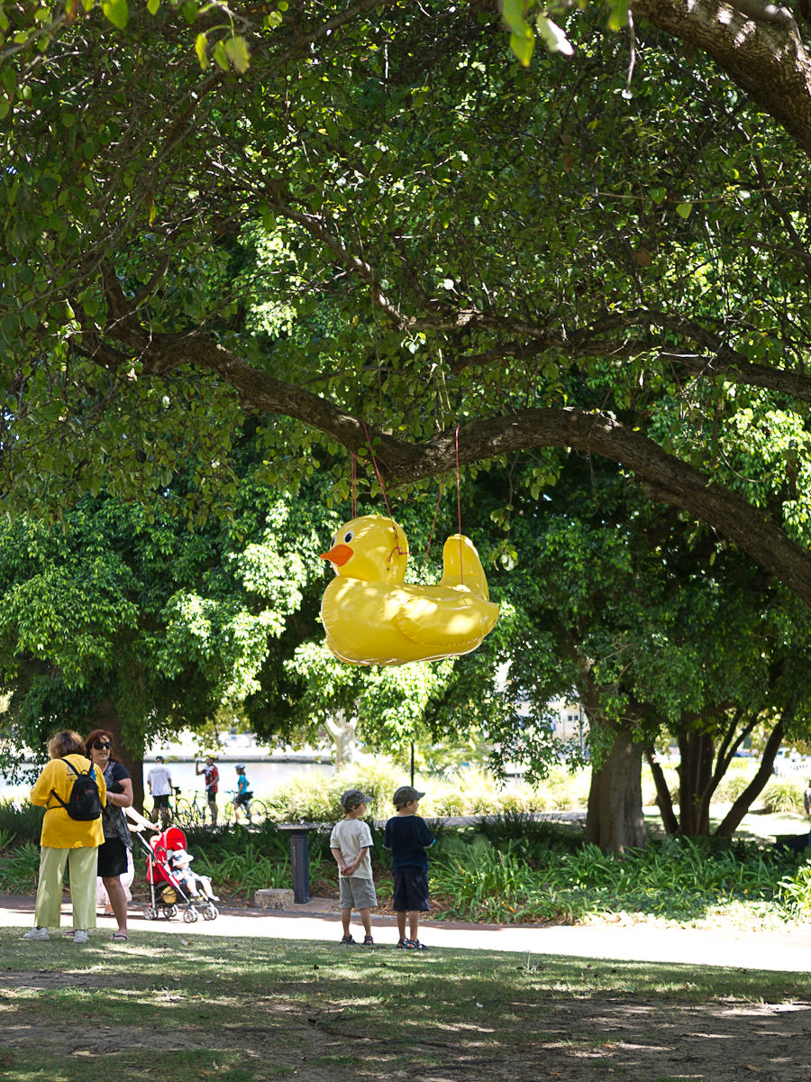 Apparently ducks grow on trees in East Perth