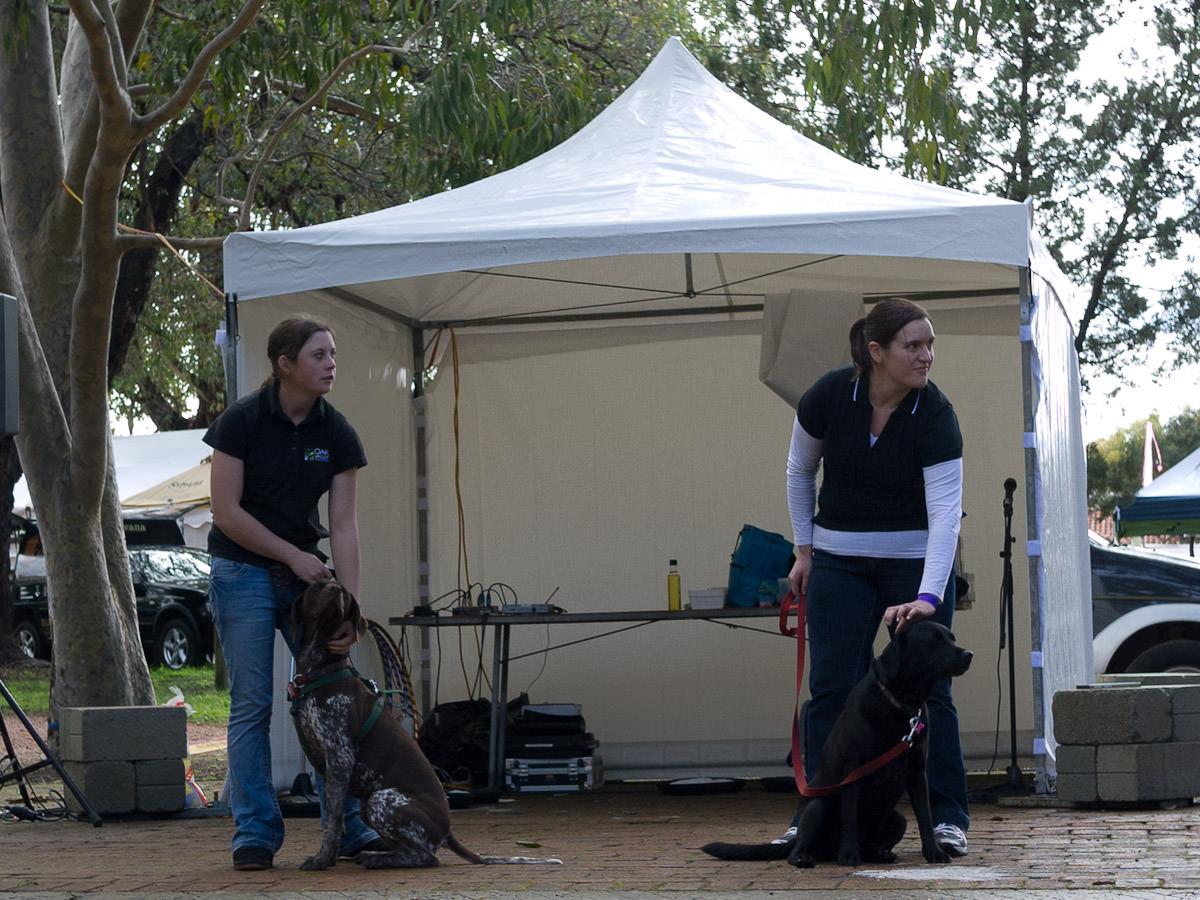 Truffle dog demo - Digit and Roxy