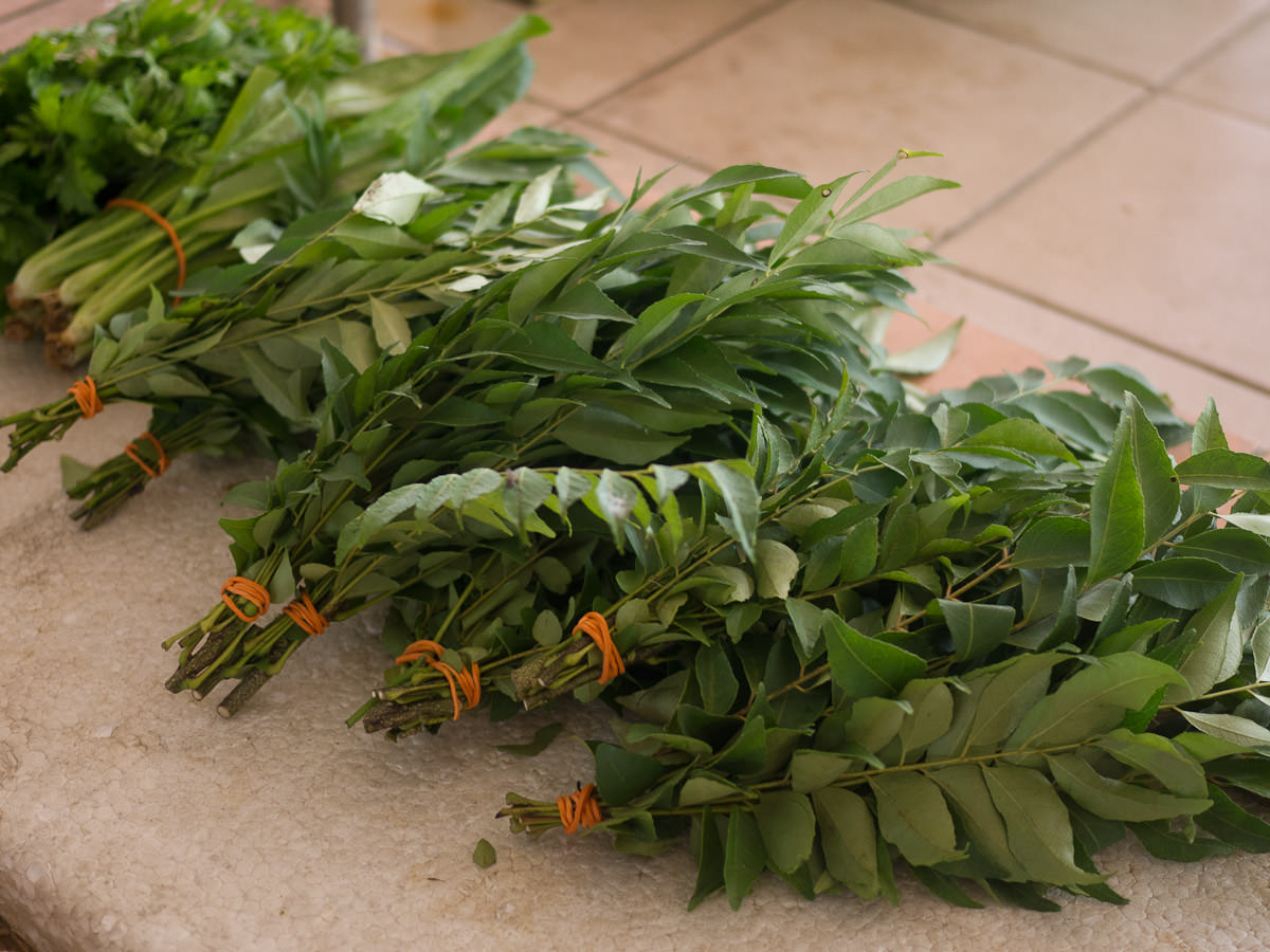 Fragrant fresh curry leaves