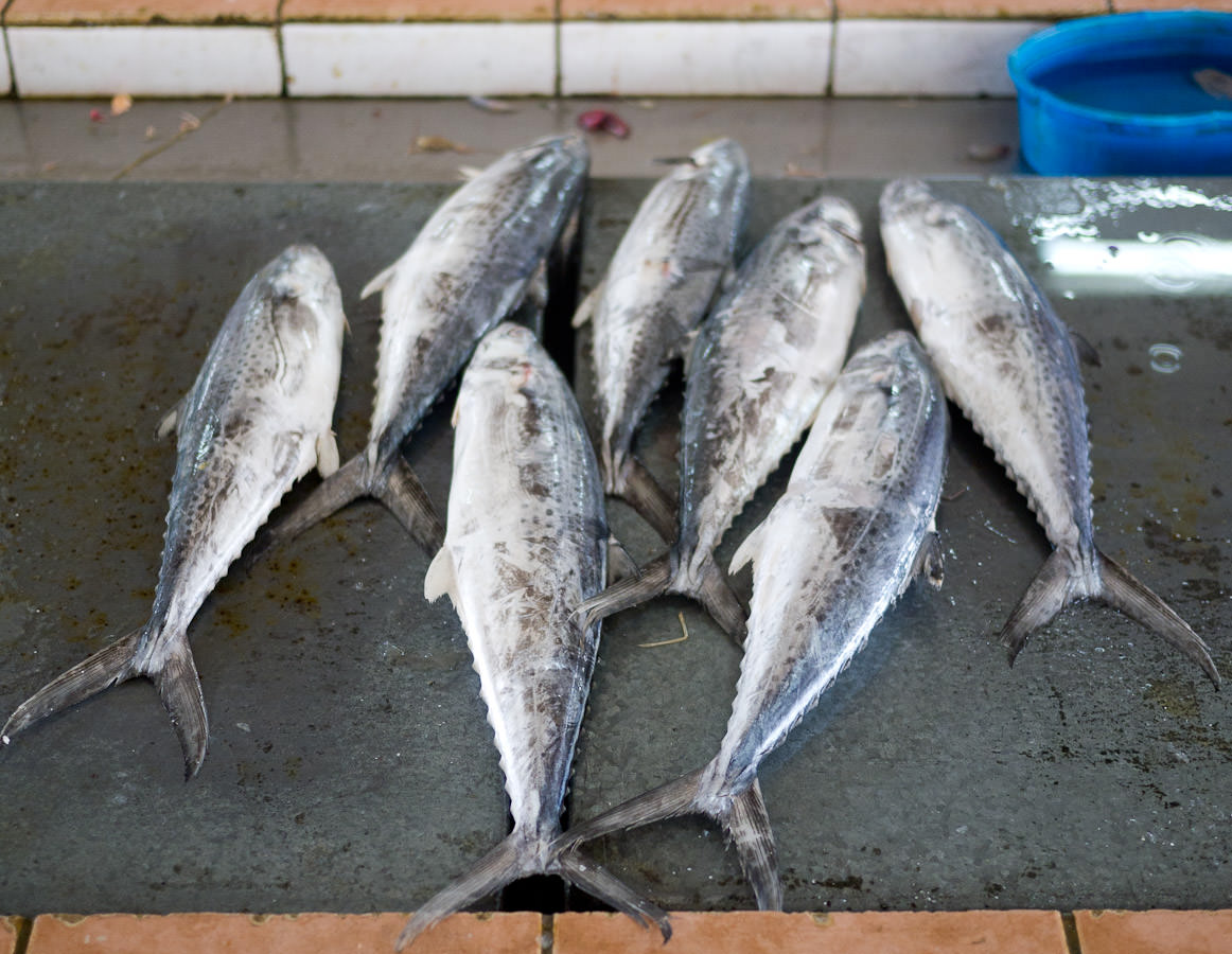Are these tuna?