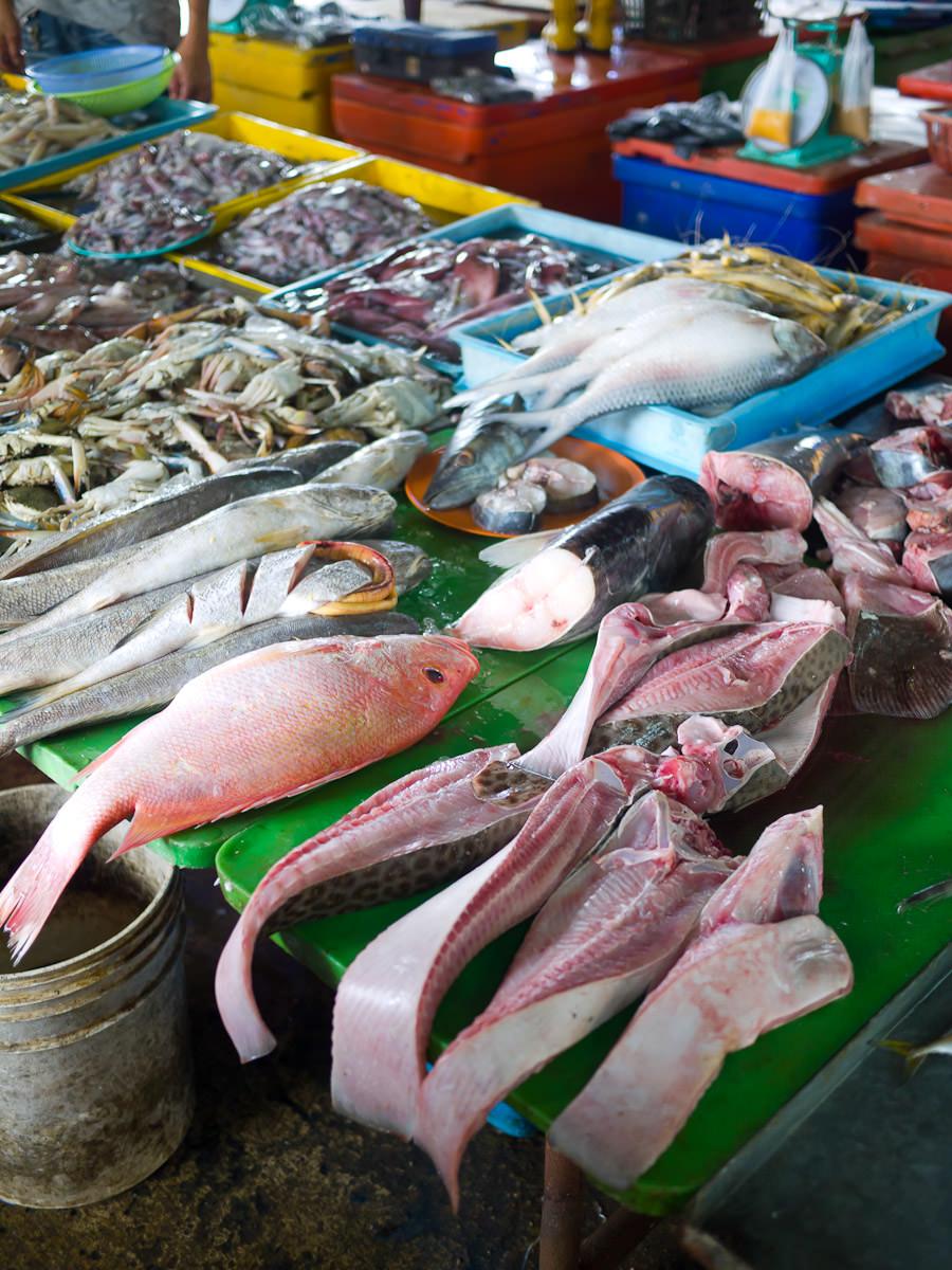 Many varieties of fish