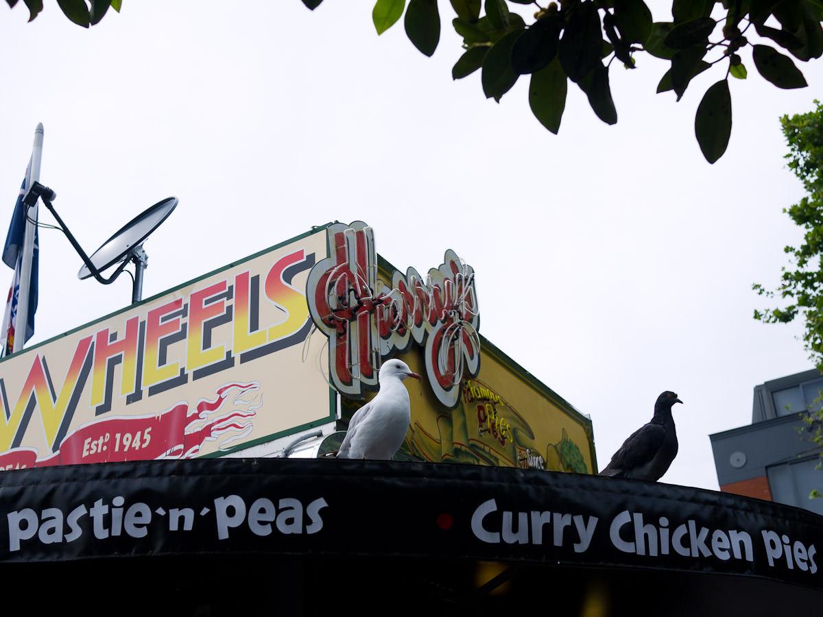 Birds on the roof of Harry's Cafe de Wheels, Woolloomooloo