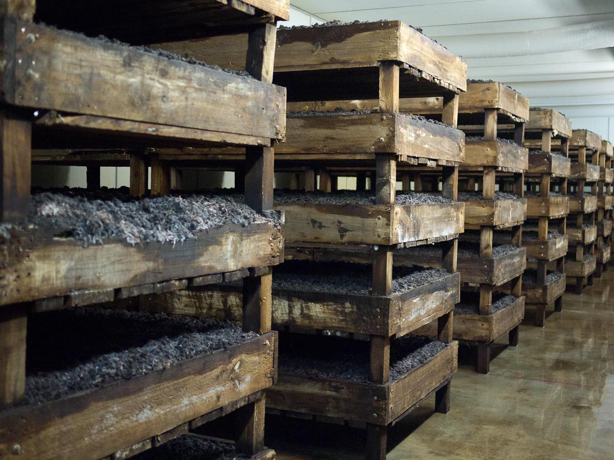 Mushroom beds