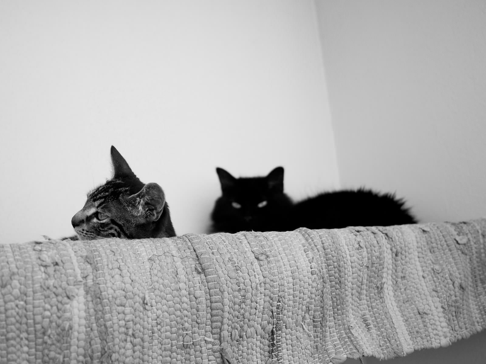 Truffle and Pixel are getting on well, but Pixel's always on alert for kitten attacks