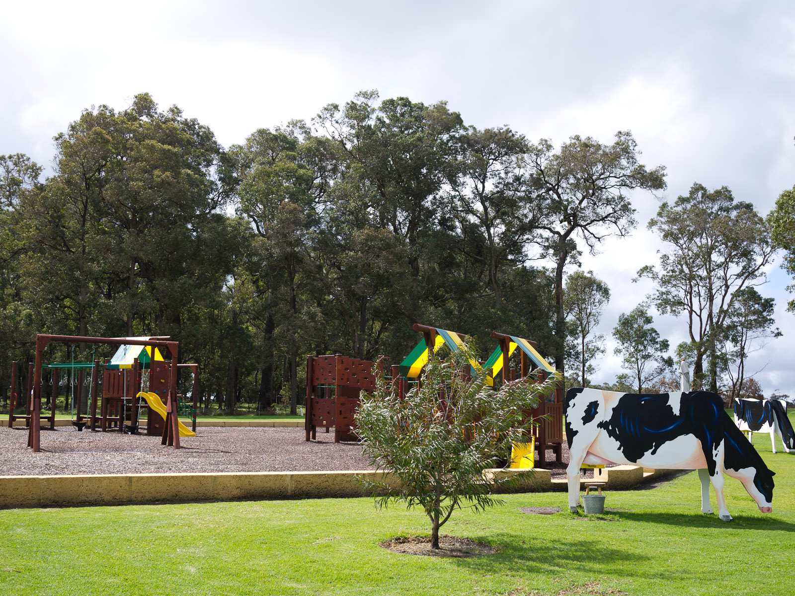 Cows and playground