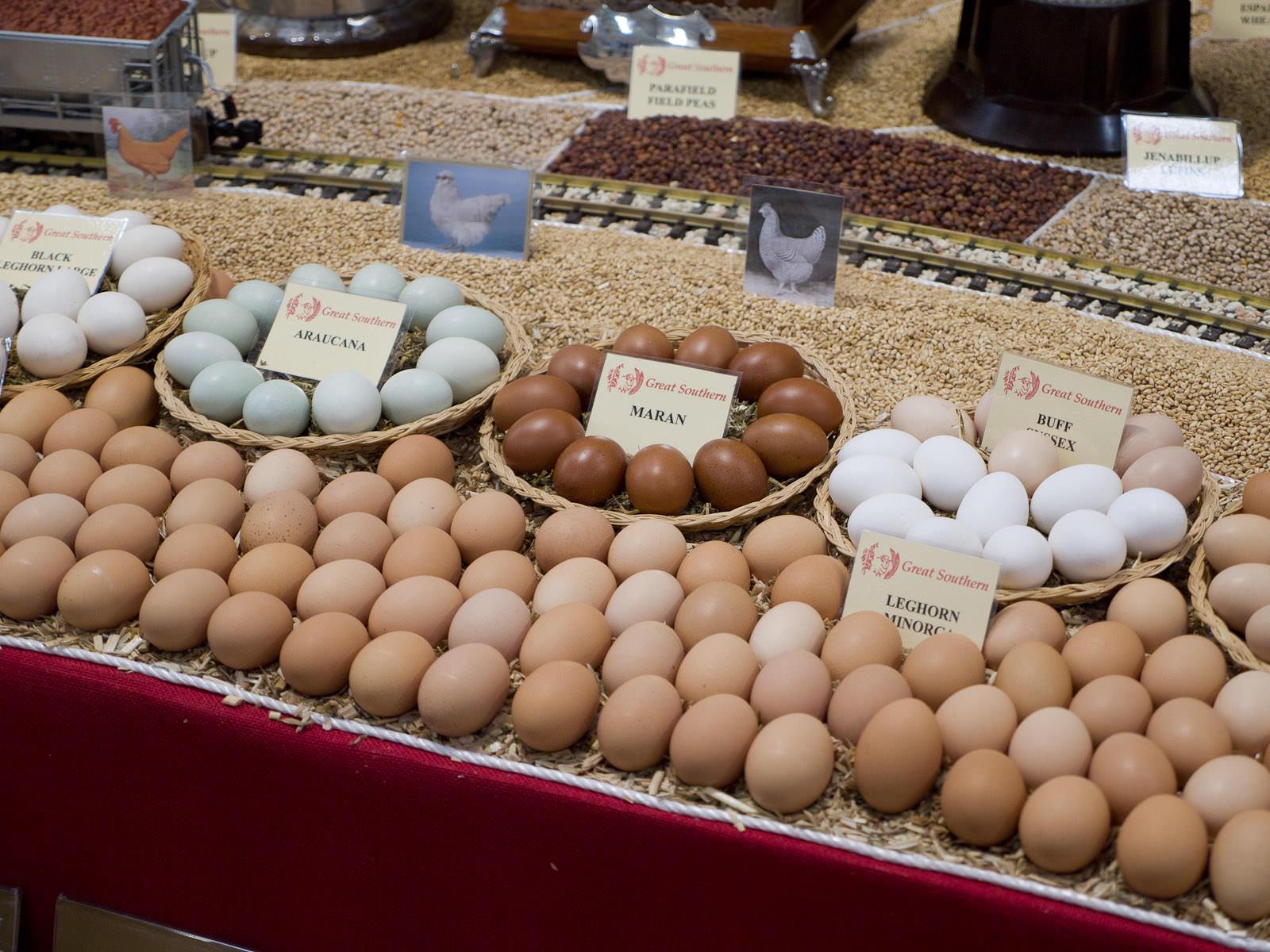 Great Southern region - eggs