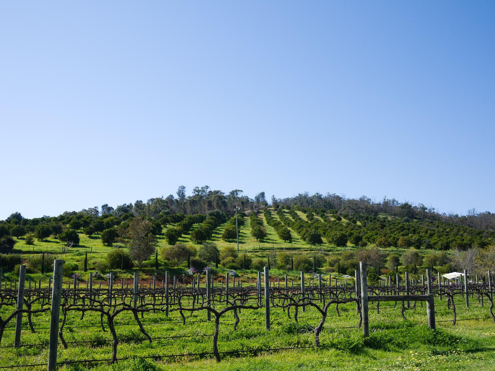 Christos Valley Estate vineyard