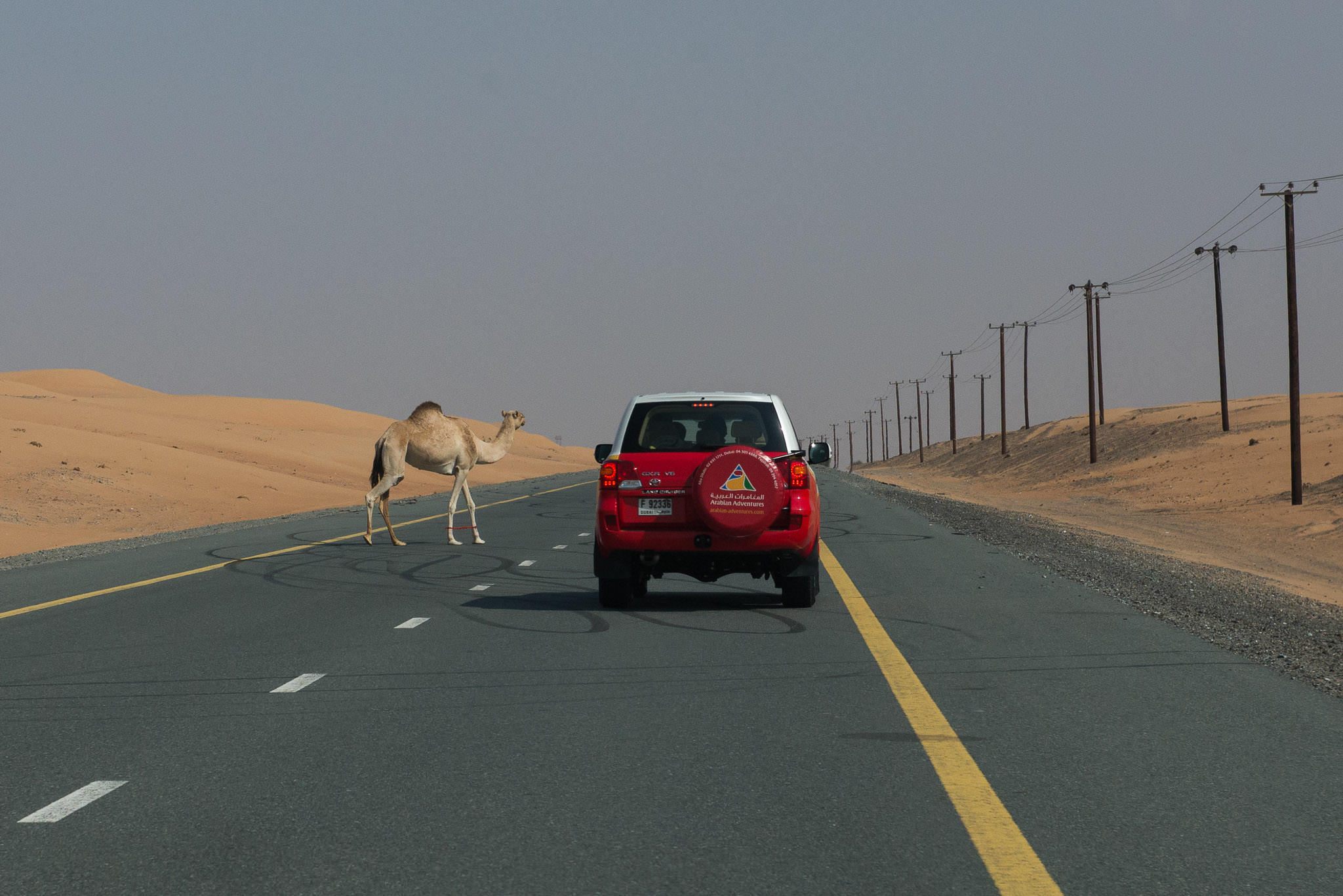 Close encounters of the camel kind