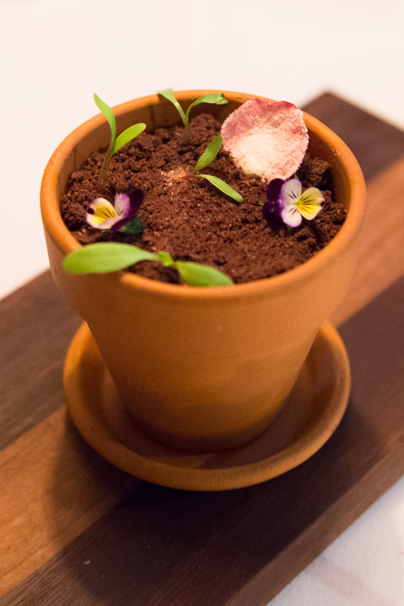 Chocolate garden: Valrhona chocolate mousse, salted caramel, peanut dacquoise, macadamias
