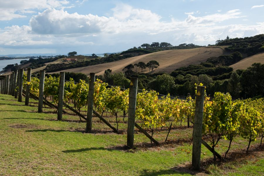 Cable Bay Vineyards, Waiheke Island, New Zealand
