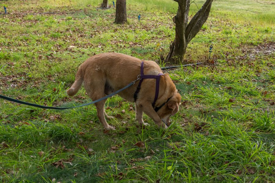 Late taps the ground to show where the truffle is