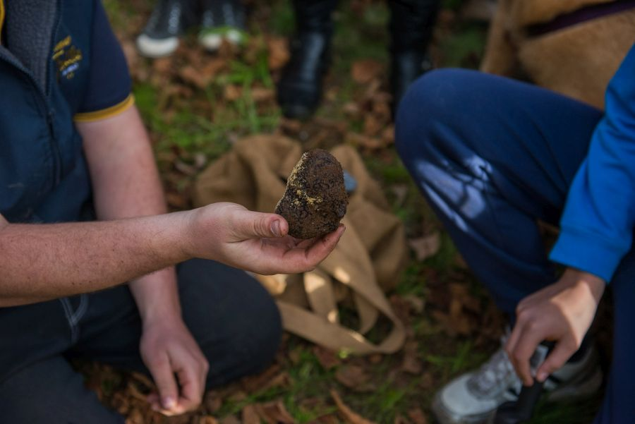 The first truffle found by Latte