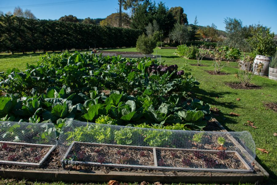 Herb and vegetable garden at Craggy Range