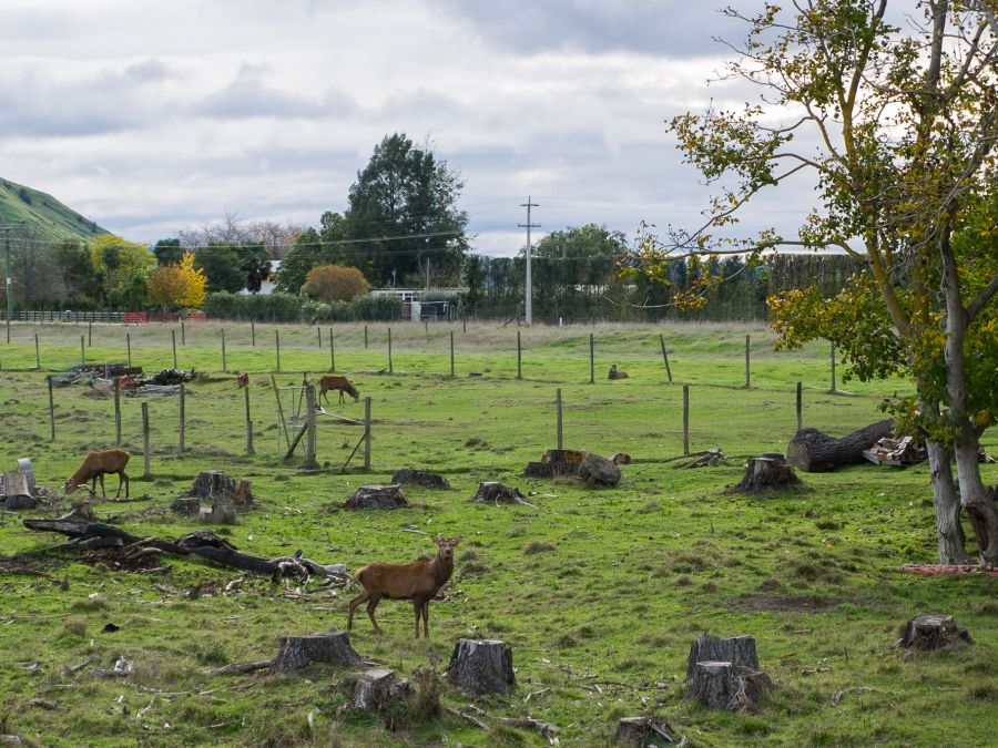 A deer farm.