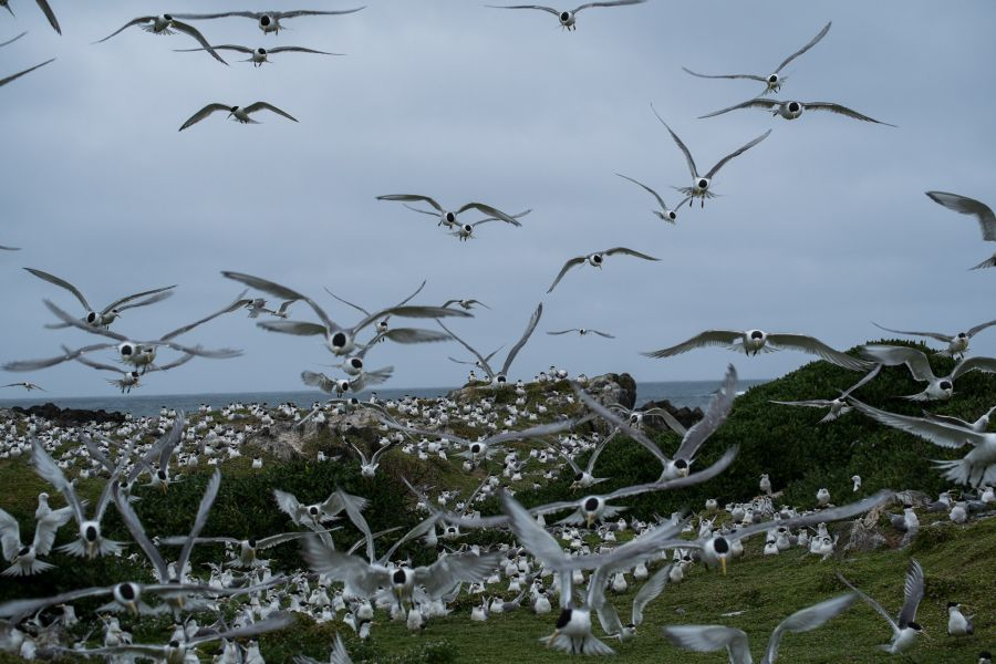 At the tern rookery