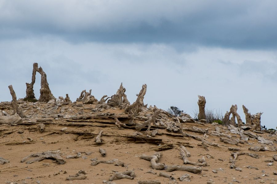 The Calcified Forest