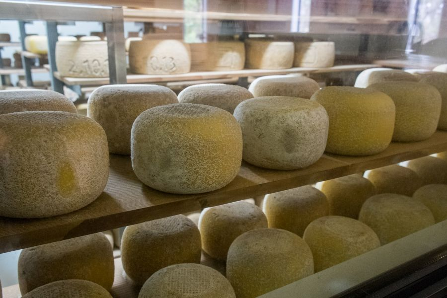 The Bruny Island cheese room