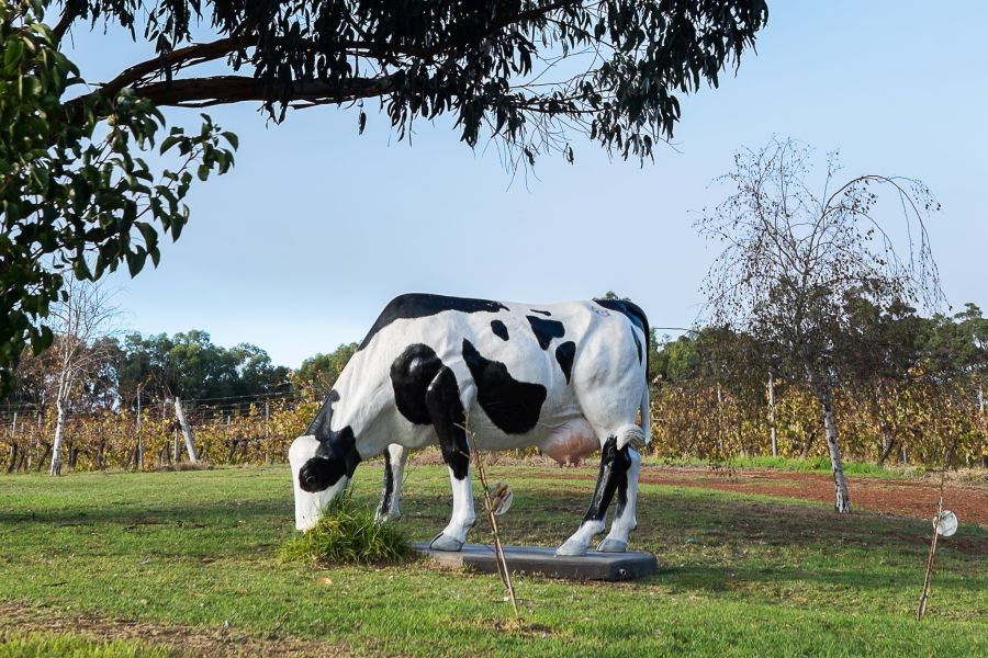 There's even a Cowtown cow next to the Bettenay's car park