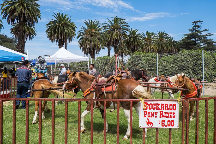 Buckaroo Pony Rides