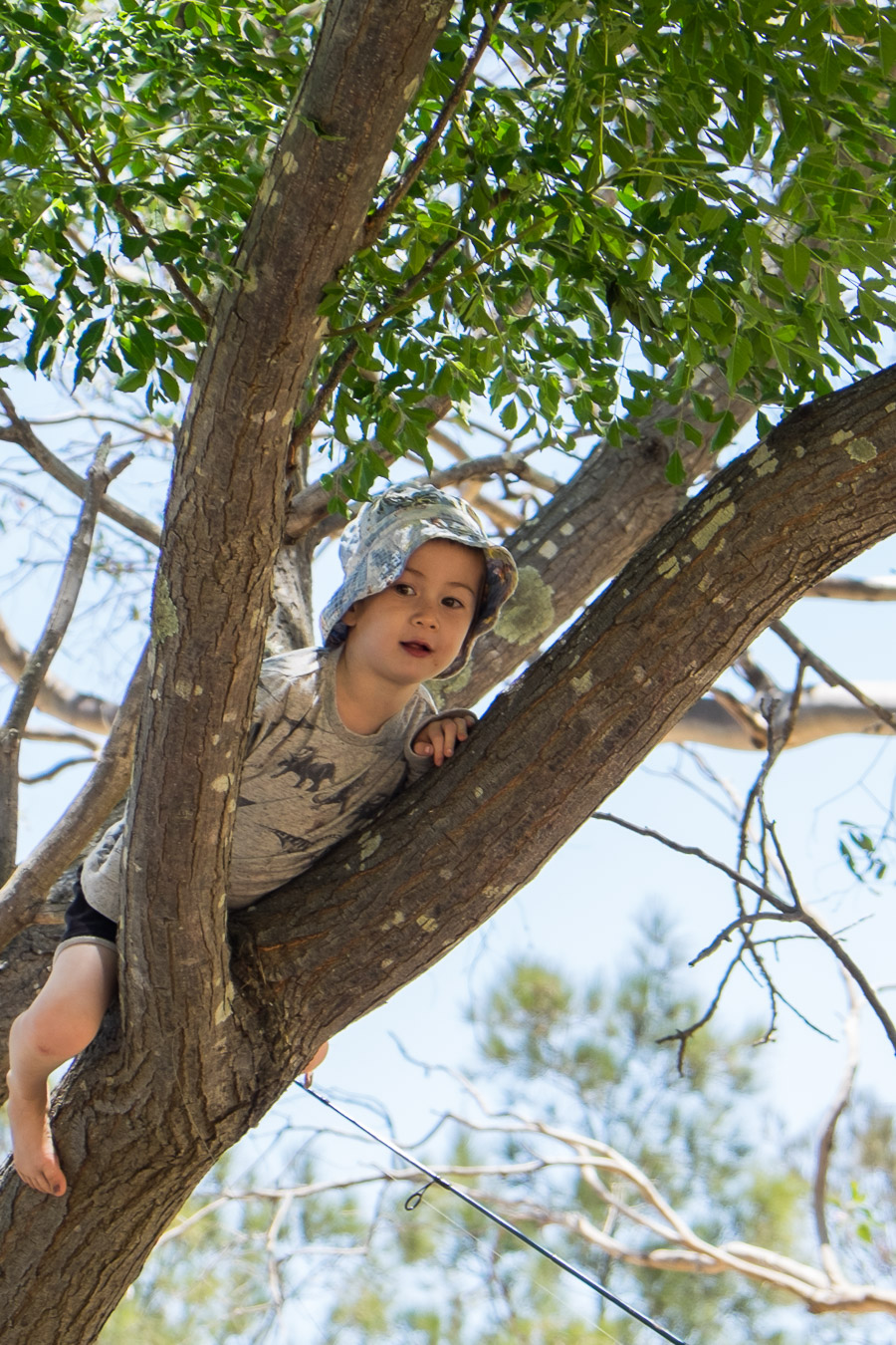 Caleb in the tree