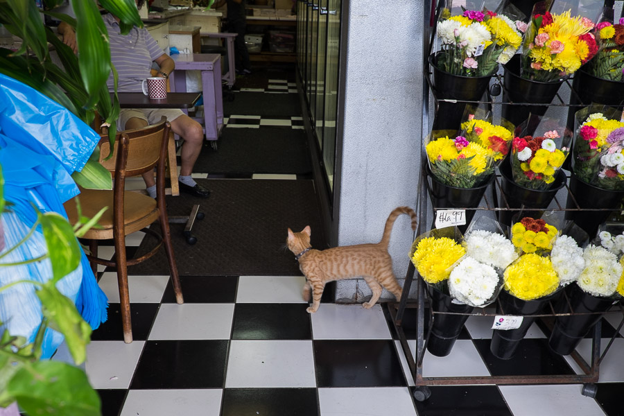 Florist cat in Chinatown