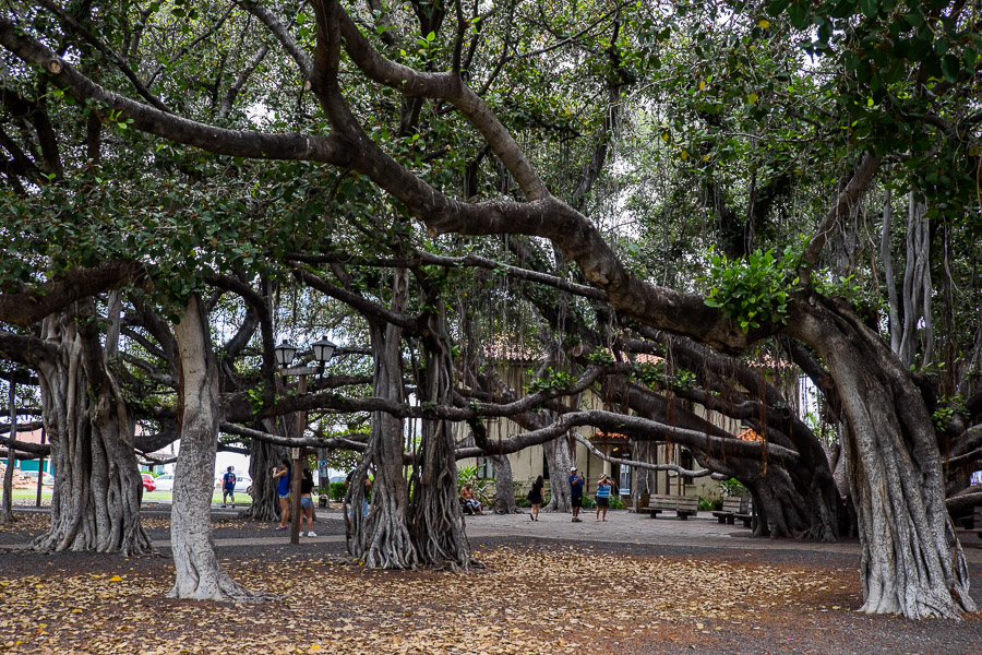 The banyan tree park opposite Local Boys is worth a visiting.
