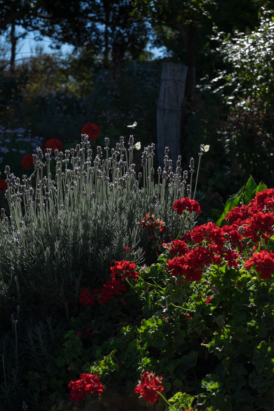 Lovely gardens at Coriole